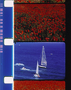 Voiliers et Coquelicots (Sailboats and Poppies)