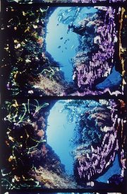brakhage-painted