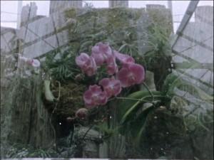 broomer_conservatory_01